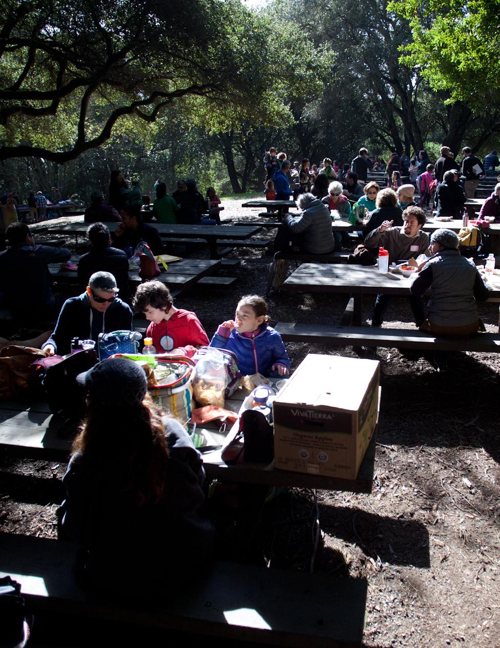 Tu B'Shvat: Experiencing Redwoods Together
