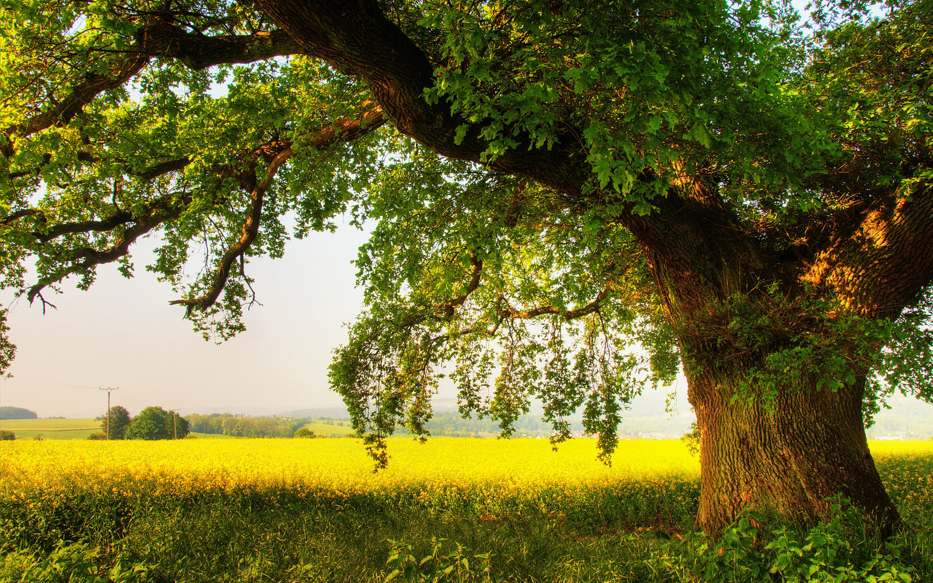 oak-tree-nature-hd-wallpaper-1920x1200-9606